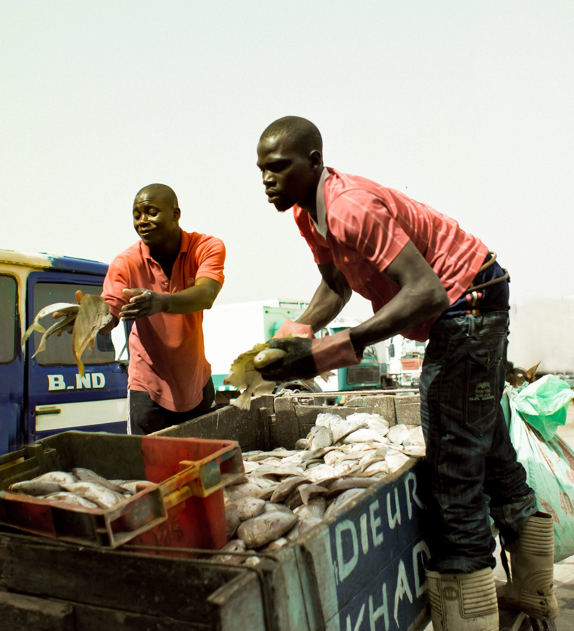 Two Fishermen Unloading Their Catch and Polishing Their Gold